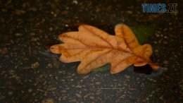 DSC 0049 260x146 - В Житомир прийшла справжня осінь (ФОТО)