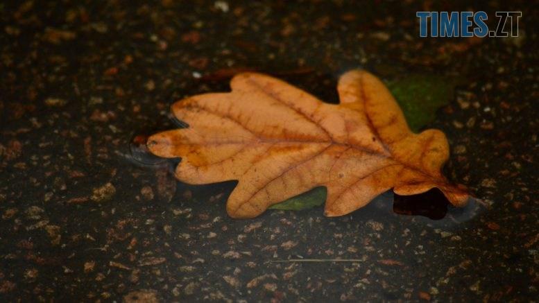 DSC 0049 777x437 - В Житомир прийшла справжня осінь (ФОТО)