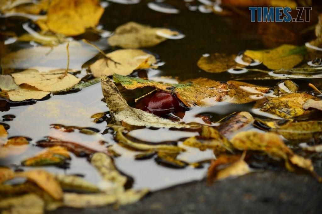 DSC 1202 1024x681 - В Житомир прийшла справжня осінь (ФОТО)