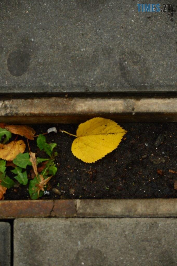 DSC 1226 681x1024 - В Житомир прийшла справжня осінь (ФОТО)