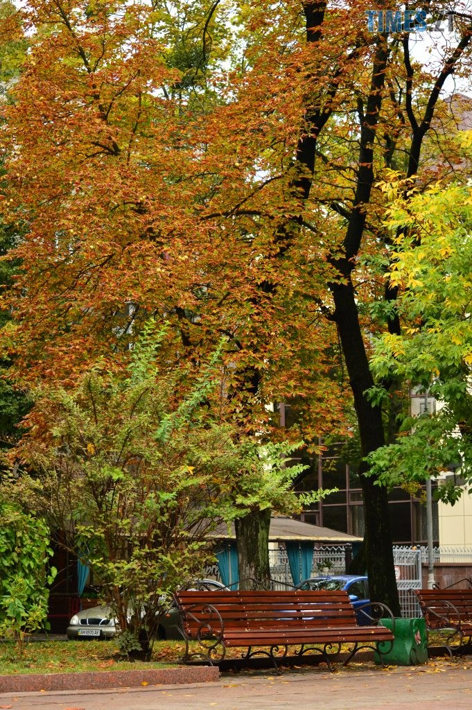 DSC 1375 681x1024 - В Житомир прийшла справжня осінь (ФОТО)
