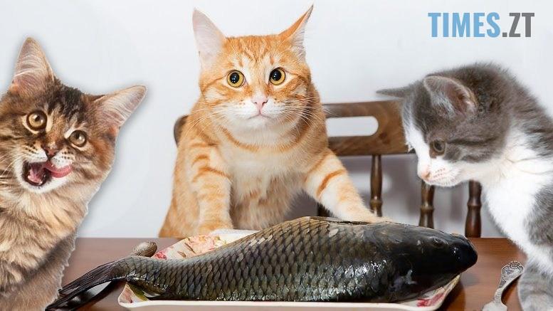 maxresdefault 3 777x437 - Бігом за халявою!  В неділю житомирянам роздаватимуть безкоштовну рибу