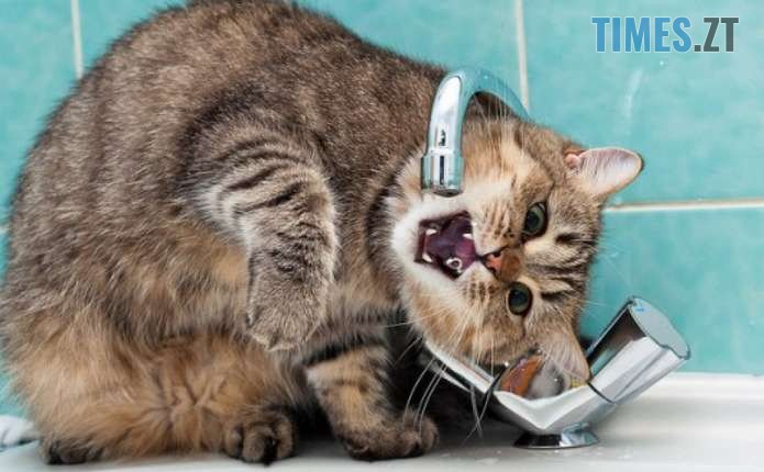 496c5e27371dbc86e3e7030f185a728e - Сьогодні водоканал призупинить подачу води за кількома адресами