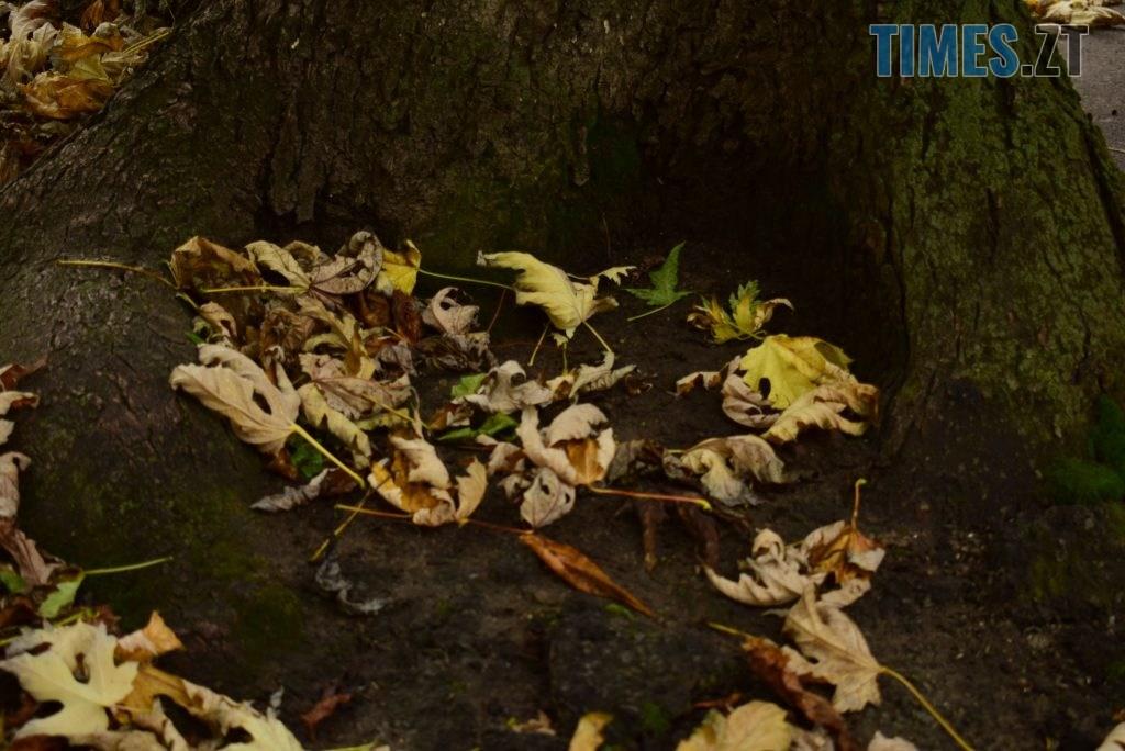 DSC 1094 1024x684 - У Житомирі справжній листопад (ФОТО)