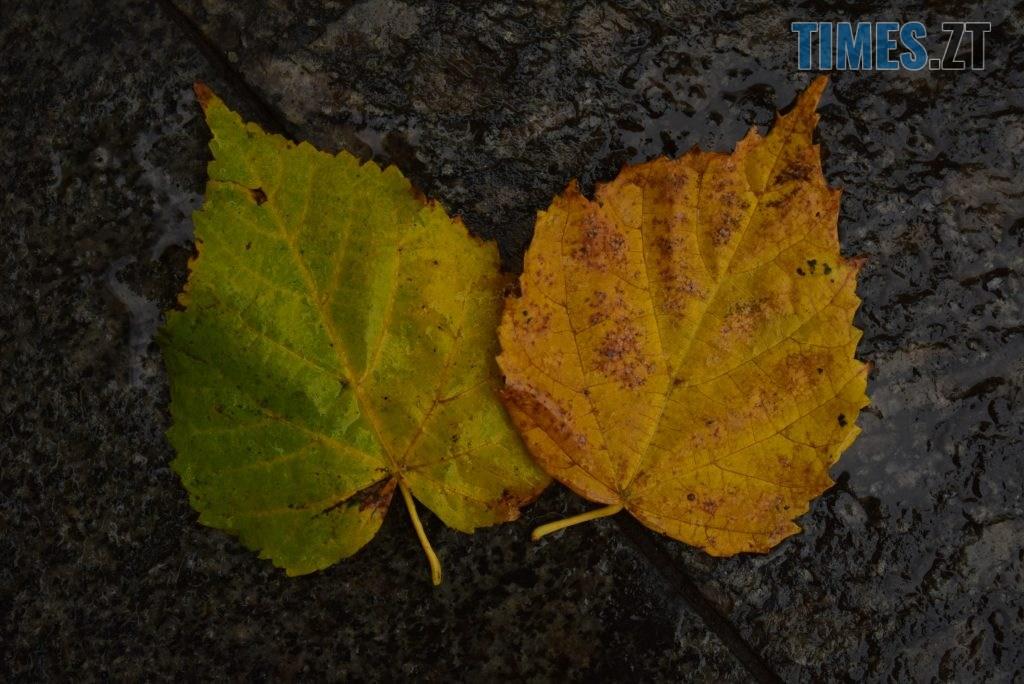 DSC 1108 1024x684 - У Житомирі справжній листопад (ФОТО)
