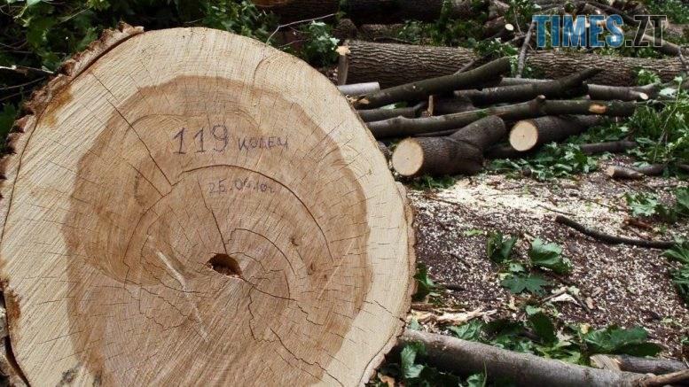 1467204519 7746 1200x600 1 777x437 - На Житомирщині знову виявили незаконну вирубку дерев на понад 6 млн грн