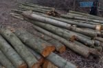 1655113 u zhitomiri na vulitsi korostishivska nevidomi zrizali dereva 150x100 - На території однієї з сільрад Житомирщини зафіксували масштабну порубку дерев на майже 1,5 млн грн