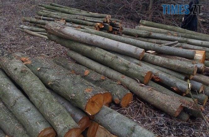 1655113 u zhitomiri na vulitsi korostishivska nevidomi zrizali dereva 665x437 - На території однієї з сільрад Житомирщини зафіксували масштабну порубку дерев на майже 1,5 млн грн