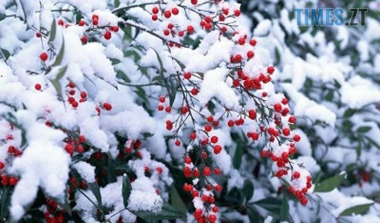 461276 745x437 - На Житомирщині очікується суттєве погіршення погодних умов: прогнозують мокрий сніг та дощі