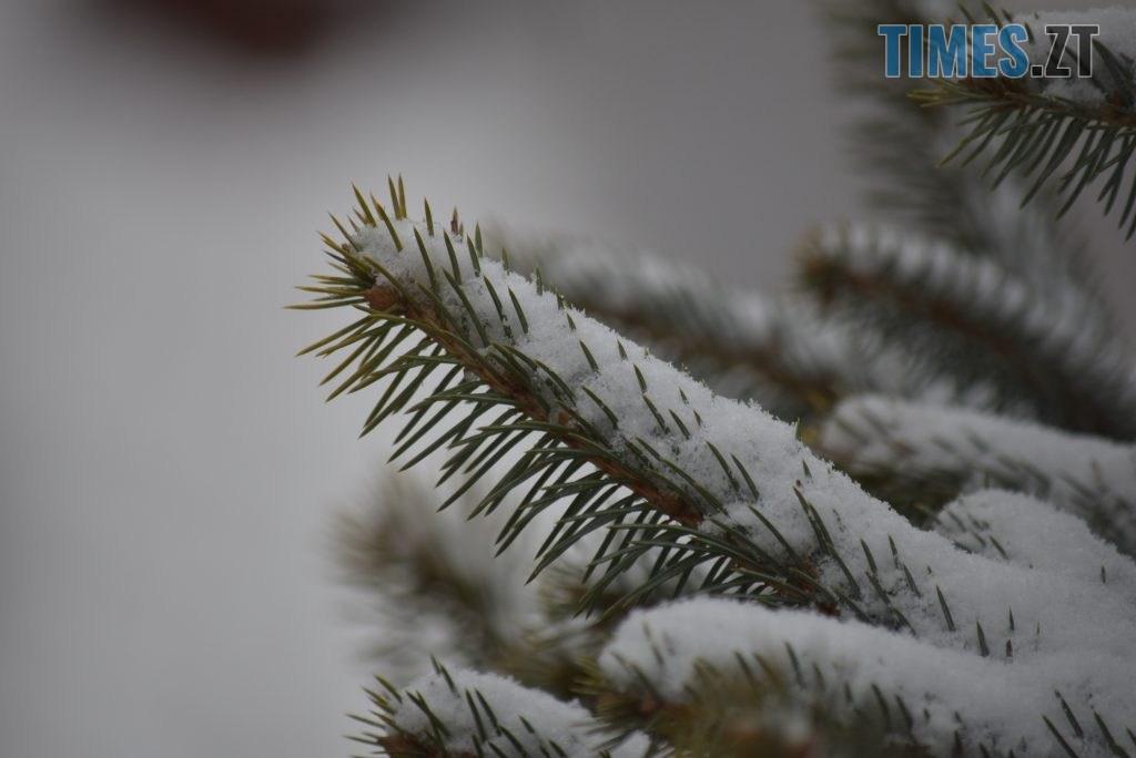 DSC 0697 1024x684 - Житомир «накрив» сніг (ФОТО)