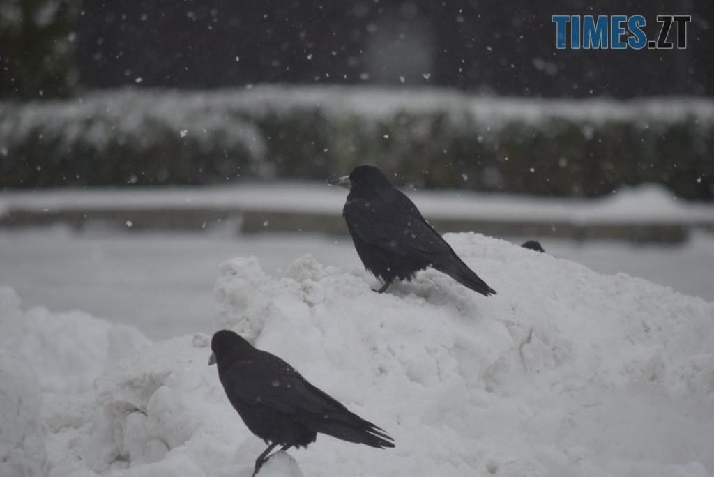 DSC 0744 1024x684 - Житомир «накрив» сніг (ФОТО)