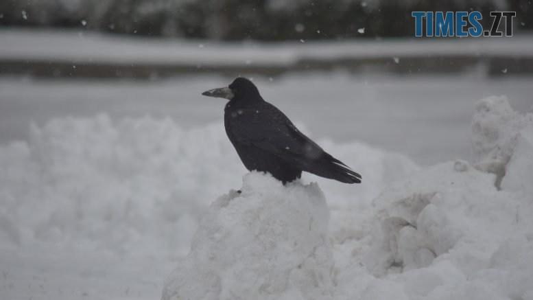 DSC 0745 777x437 - Житомир «накрив» сніг (ФОТО)