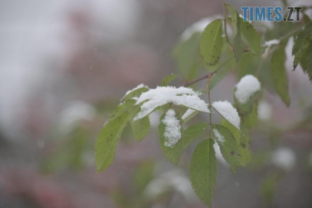 DSC 0762 1024x684 - Житомир «накрив» сніг (ФОТО)