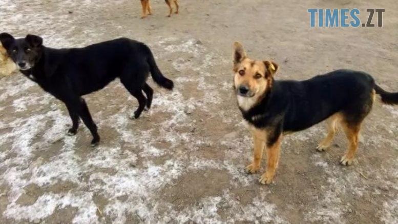 Screenshot 1 7 777x437 - У Житомирі погодили 15-мільйонний бюджет на безпритульних тварин