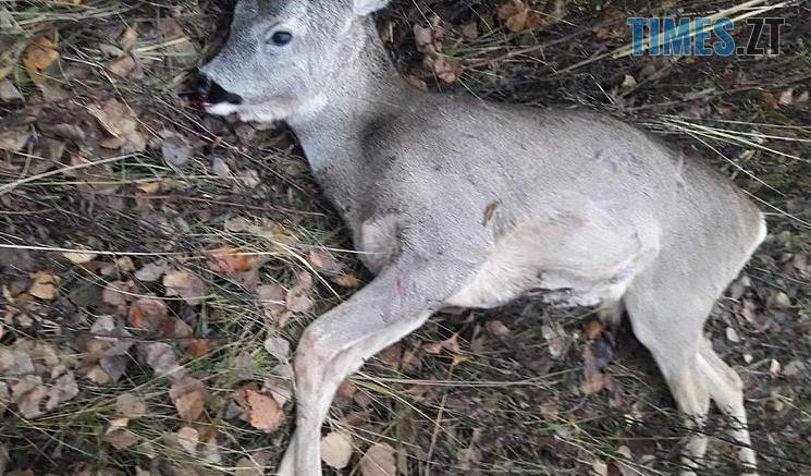 Screenshot 2 2 745x437 - Штраф у 32 тис грн сплатять браконьєри, які вбили козулю в Житомирській області