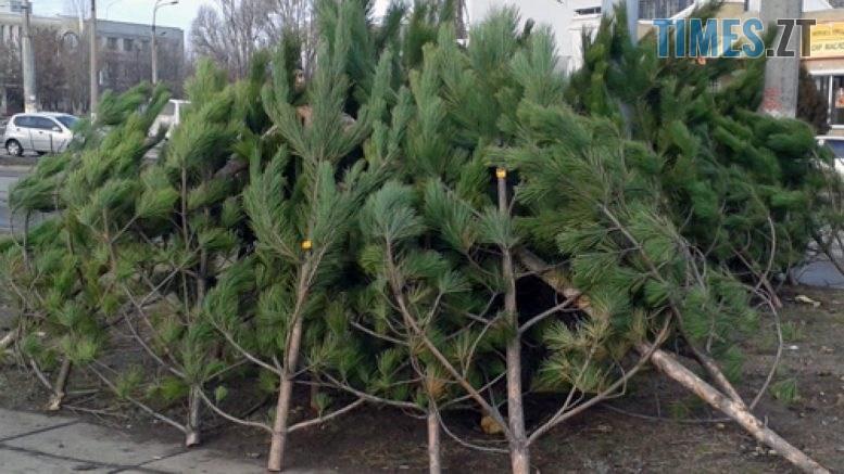 photo 777x437 - У Житомирській міськраді повідомили адреси, де продаватимуть новорічні ялинки