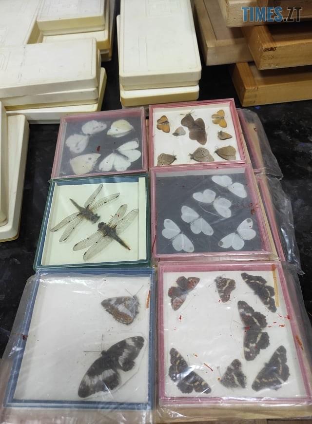 135899641 2798229730442789 4433702363618576908 n - Житомирський краєзнавчий музей поповнився новими експонатами (ФОТО)