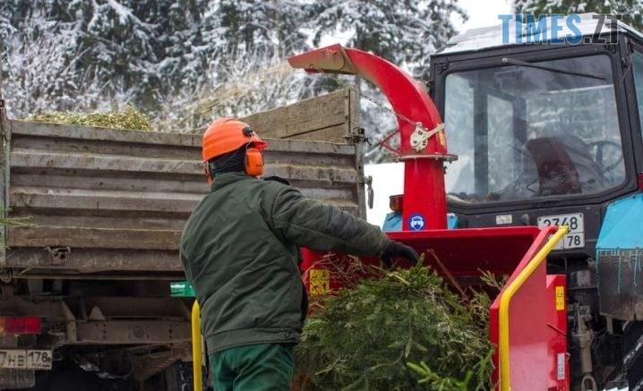 1547649888 50762716 1306039346203186 5270554372663672832 n 718x437 - Житомирське КП «Зеленбуд» з 11 січня приймає новорічні хвойні дерева на утилізацію