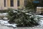 DSC 0643 150x100 - Житомиряни обурені реконструкцією Нового бульвару через знищені дерева (ФОТО)