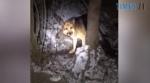 Screenshot 1 9 150x83 - Порятунок Рема: на Житомирщині літня вівчарка провалилася в урвище, рятували пса більше двох годин (ВІДЕО)