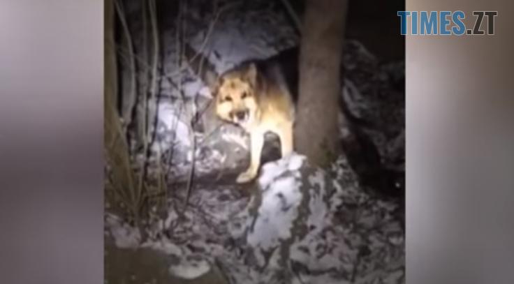 Screenshot 1 9 - Порятунок Рема: на Житомирщині літня вівчарка провалилася в урвище, рятували пса більше двох годин (ВІДЕО)